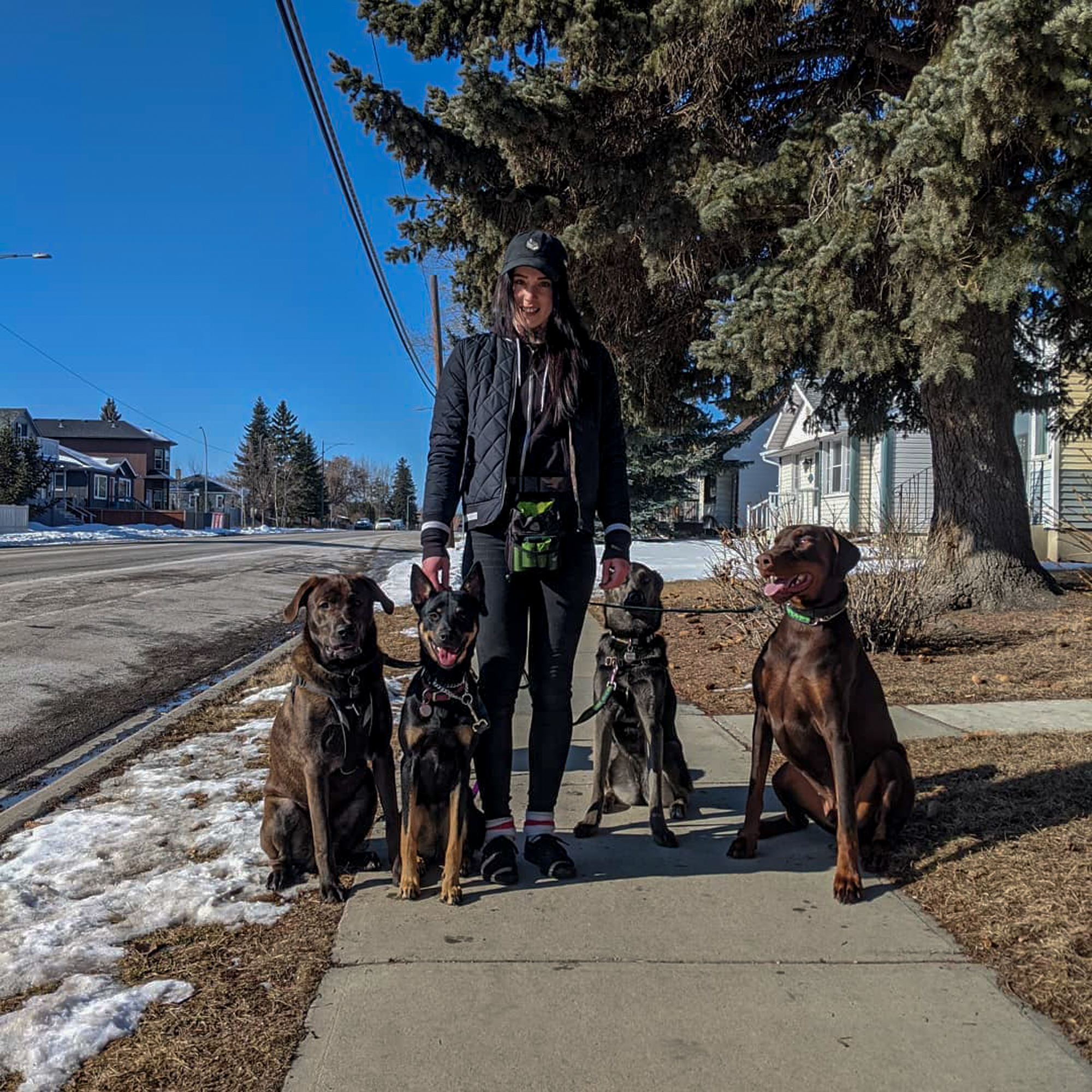 Hannah & the 3 of Hounds Pack out for a Dog Walk